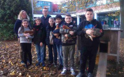 Hühnerprojekt an der Karl-Kessler-Schule
